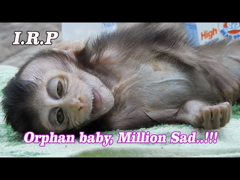I.R.P Million Pity poor Orphan Taylor live in misery with aunt until pass away, Poorest baby 2020