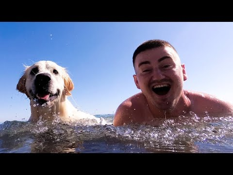 My Funny Dog and I Swim in the Sea and Have a Great Time on the Beach VLOG