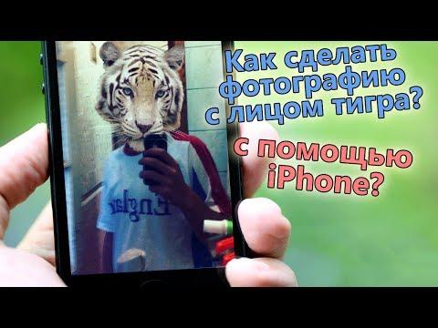 Как сделать фотографию с лицом тигра, кота, медведя на iPhone?