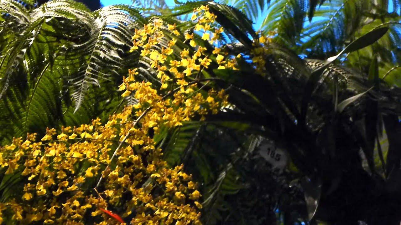 6925 mini orqu deas de color amarillo raw flores - Tipos de flores silvestres ...