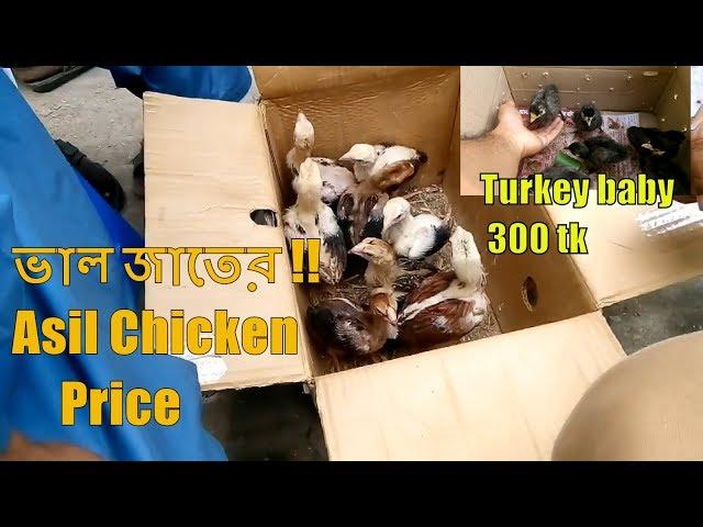 Alive Chicken Market | Travel Bangla 24 | Chicken Market In