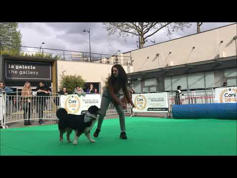 Joy-salon du Chien et du Chat-Dog dancing