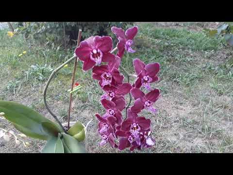 Вопрос: Где родина орхидеи?