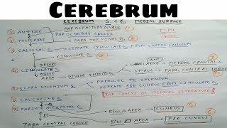 Cerebrum - Sulci and Gyri - Medial Surface : 1/2 ( Theory )