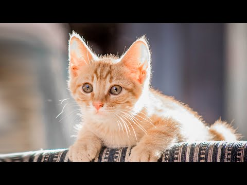 Funny Cats Videos - funny cats ✪ cute and baby cats videos compilation