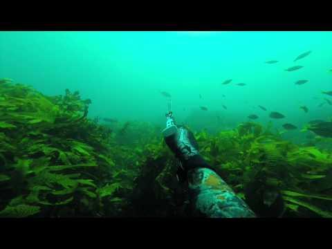 Sydney Royal National Park, Dive Session