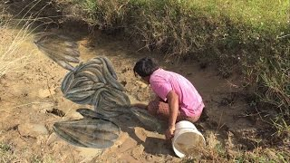 Cambodia Traditional Fishing- how to fishing in-at Battambang Wow this guy caught so many fish