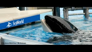 tilikum-is-dead-after-spending-three-decades-in-captivity