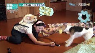 2016.05.08《寵物大聯萌》完整版 保姆+毛孩的新挑戰 聯手解任務去!