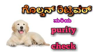 How to check purity of Golden retriever in kannada