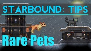 Starbound Tips: Rare Pets