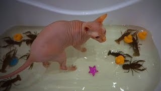 Funny Hairless Cats 😹 Funny Sphinx Cats Fails (Part1) [Epic Life]