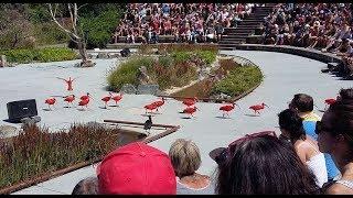 Extraits de spectacle d'oiseaux en vol  - Parc des Oiseaux   Villars les Dombes Ain