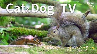 Cat and Dog TV: Cute Chipmunks and Squirrels  Videos for Cats and Dogs To Watch