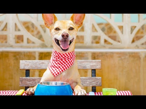 Top 3 Dog-Friendly Restaurants in the Country