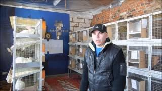 Покупка кроликов для разведения.(В этом видео я постарался дать несколько советов для новичков. Для людей которые хотят заняться кроликами..., 2015-02-27T15:07:39.000Z)
