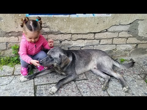 Friendly DOG and Cute KID Playing together and LAUGHING!