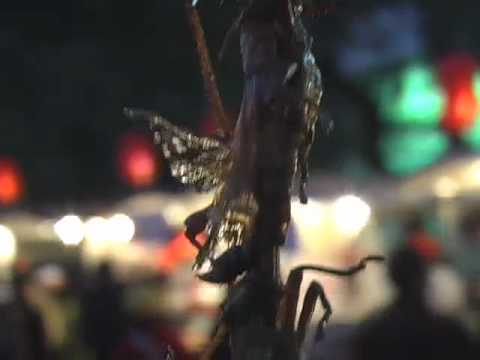 Buggin' in Beijing: Eating Bugs And Other Creatures at Beijing's Night Market