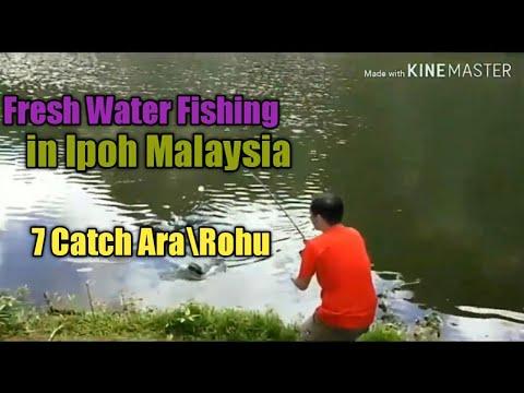 Fresh Water Fishing In Ipoh Malaysia