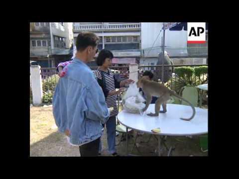 THAILAND: MONKEY'S DRINK PROBLEM