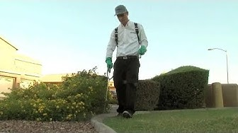Experts: Buggy summer ahead for Phoenix