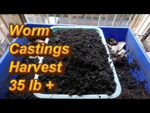 Harvesting Worm Castings | Splitting Worm Bin| Red Wiggler Bin Tour 03.07.2015