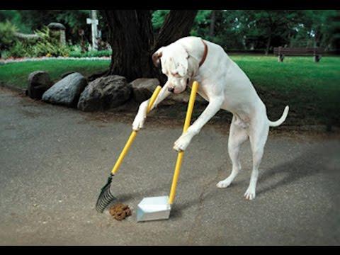 Funny Dog Videos – Hit Funny Dog Videos Compilation 2015