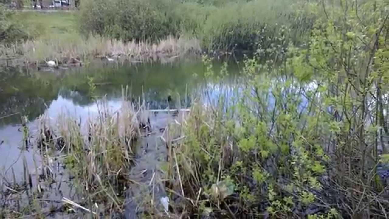 Звуки болота и лягушек скачать
