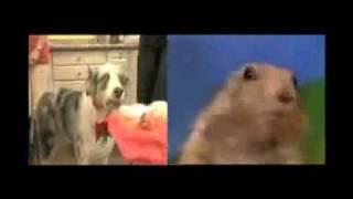 Drama Prairie Dog vs. Cupcake Dog thumbnail