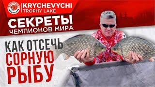 Рыбалка на карпа Как отсечь сорную рыбу