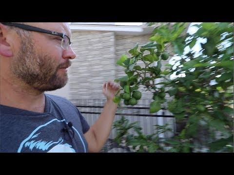 An Abundant Homestead Garden