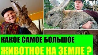 Какое животное самое большое на Земле?