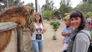 видео Зоопарк Фригия в Тунисе
