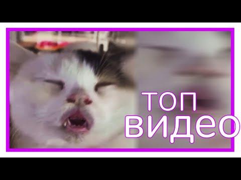 Видео: КОТ, НЕ БОЛЕЙ! || Видеофид