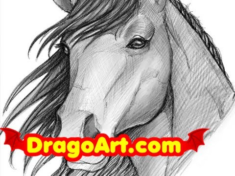 How to draw a horse sketching a horse head step by step