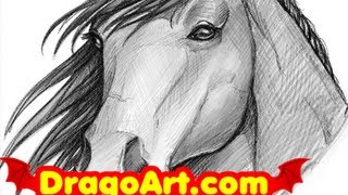 How to Draw a Horse, Sketching a Horse Head, Step by Step
