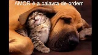 Animais Amorosos -  Il Divo - Hallelujah