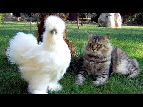 FUN for EVERYONE - Top FUNNY ANIMALS