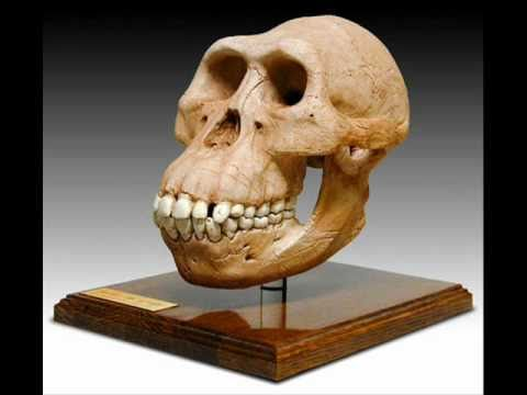 Early Hominids - YouTube