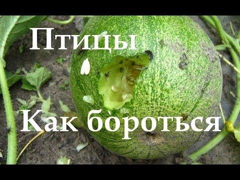 Как избавиться от ворон - ru.wikihow.com