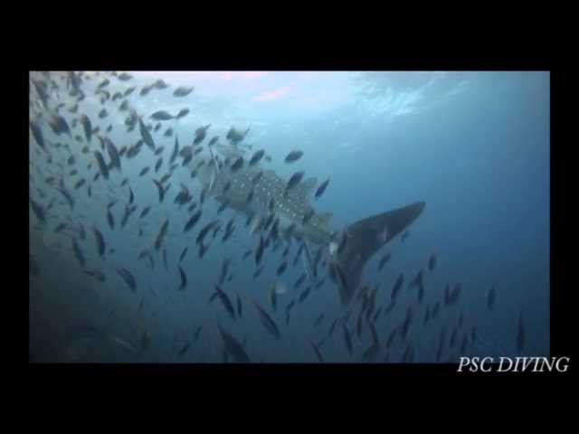 Mother  sea andaman(スミラン ダイビング)