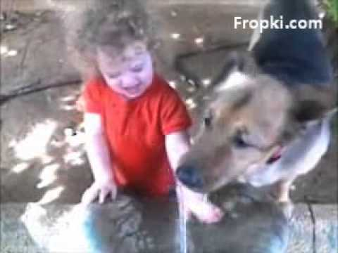 Baby and Dog fights over Drinking Water