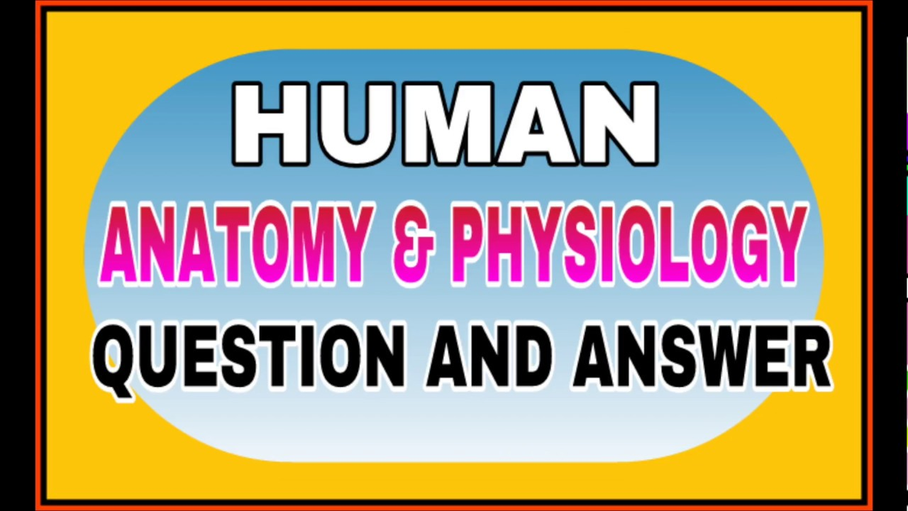 Human Anatomy and Physiology Questions and answers