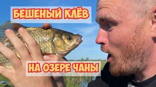 Крупный окунь и карась Чуть не сломал спиннинг пополам Рыбалка на озере Чаны