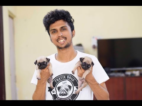 Lusy delivery video (pug delivery) pratikvlogs