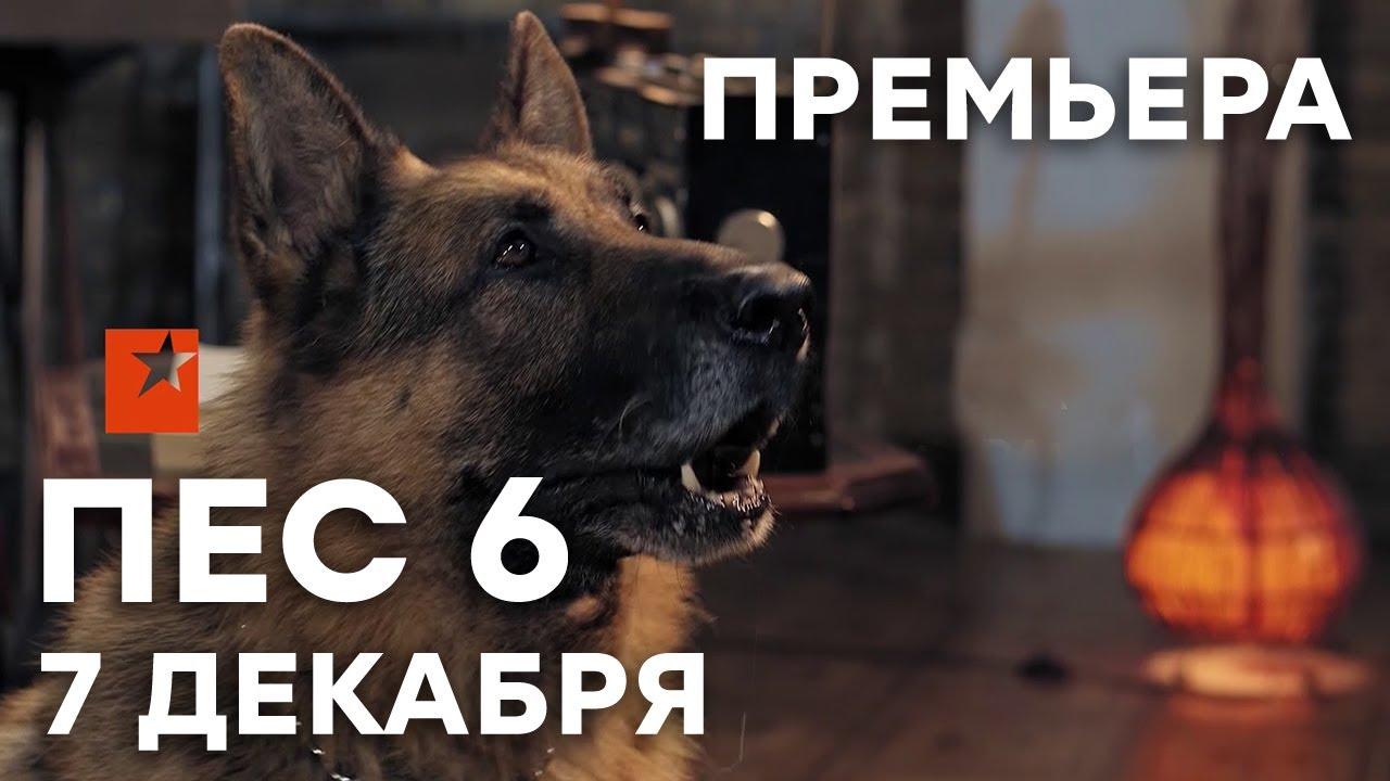 🔥 Сериал ПЕС 6 сезон - 1 СЕРИЯ - 7 декабря - ПРЕМЬЕРА   СЕРИАЛЫ ICTV