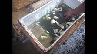 Rayesa Eel Farm (culture)/belutku