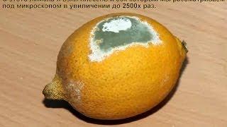Лимонный сок и плесень под микроскопом ✔...