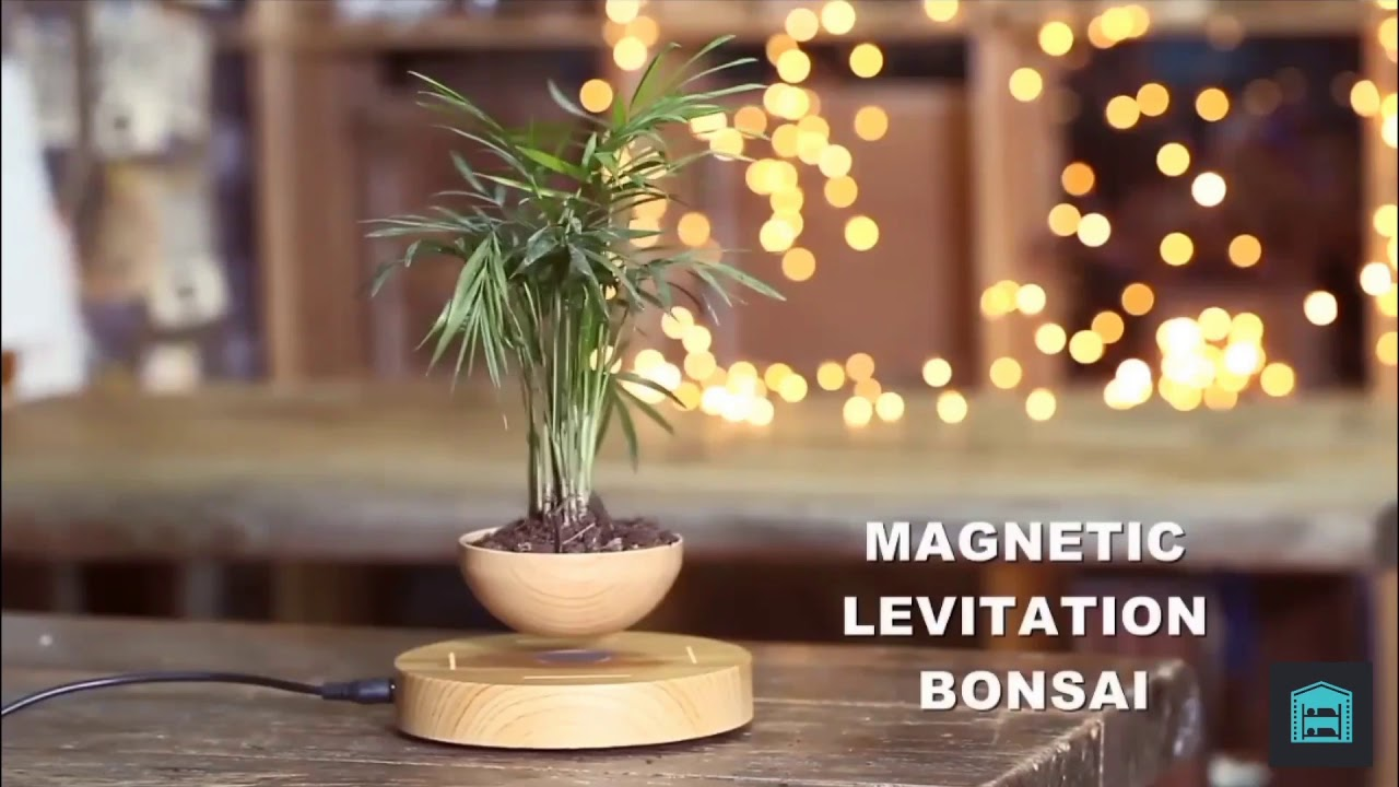 Wooden Levitating Plant Pot Rotating Indoor Home Gift - Bear