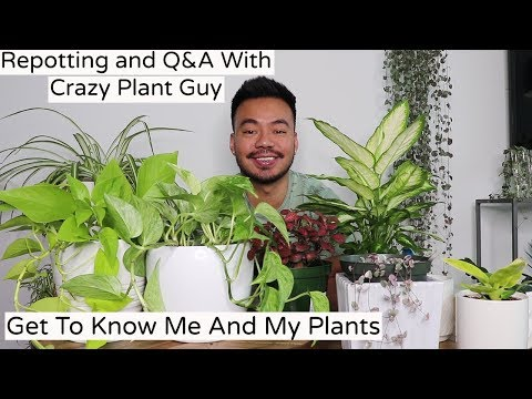 Repotting Houseplants and Q&A With Crazy Plant Guy